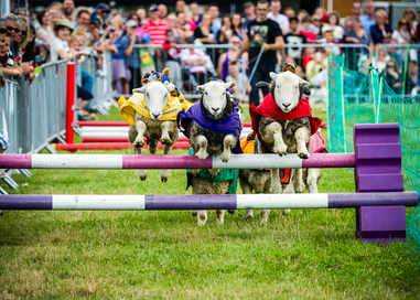 The UK's Biggest Pet Show Returns In August With A Packed Programme And Hundreds Of Attractions