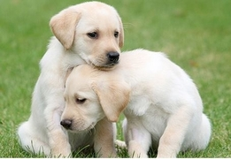 Royal Leamington Spa Guide Dogs National Open Day & Car Boot - Warwickshire